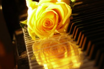 yellow-rose-on-piano