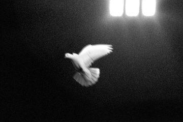 copertina disco_Le prigioni della mente